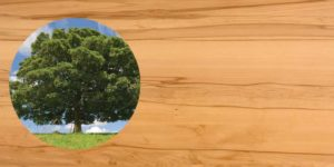 Flamy beech has a very active interest flowing grain. this is a hard wearing timber and makes beautiful chairs, dinning and kitchen tables and furniture.