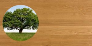 Oak timber makes amazing dinning and kitchen tables and furniture