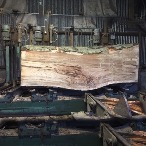 raw-trunk-in-saw